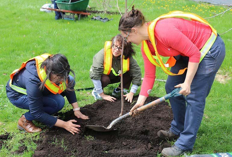 Plantation d arbres pour pallier les ravages de l agrile for College montmorency piscine